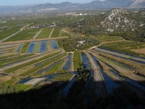 Pola mandarynkowe Delta Neretvy Źródło: Croatia.hr, odwiedzić Chorwację jesienią