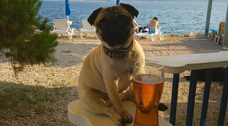 Dogs beach bar Monty's Dog w Crikvenicy, plaża dla psów w Chorwacji