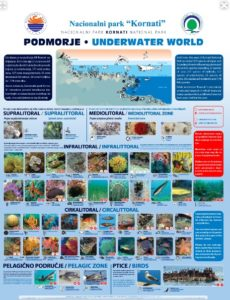 Kornati, Życie podwodne Parku Narodowego Kornati